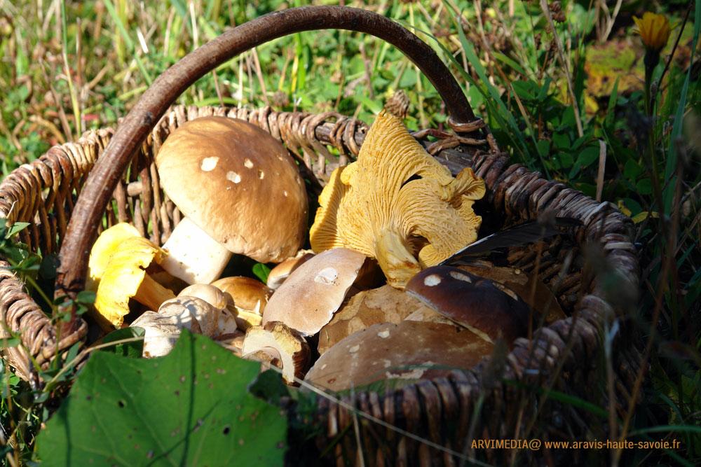 Le champignon de la cueillette l 39 assiette - Champignon qui mange le bois ...